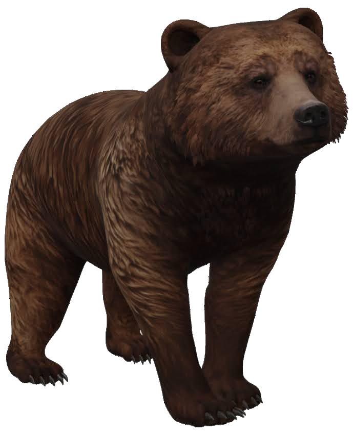 brown-bear-google-3d.png