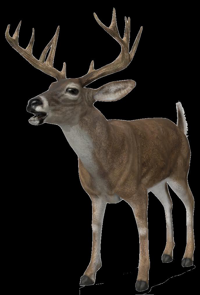deer-google-3d.png