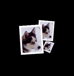 smillaenlarger-icon-1.png