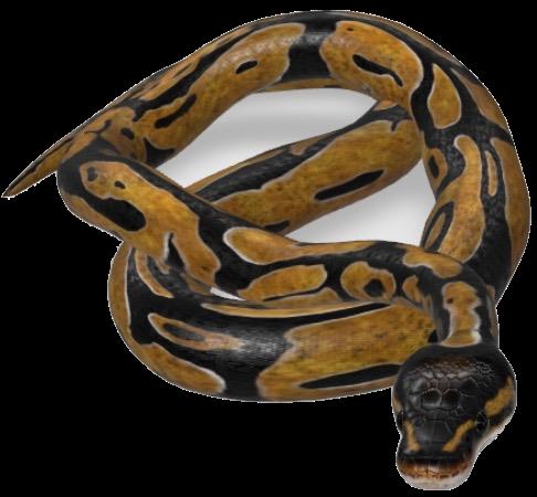 snake-google-3d.png