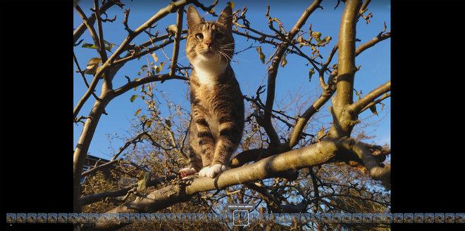 154524-phones-review-burst-photo-image1-eaemyfio6i.jpg