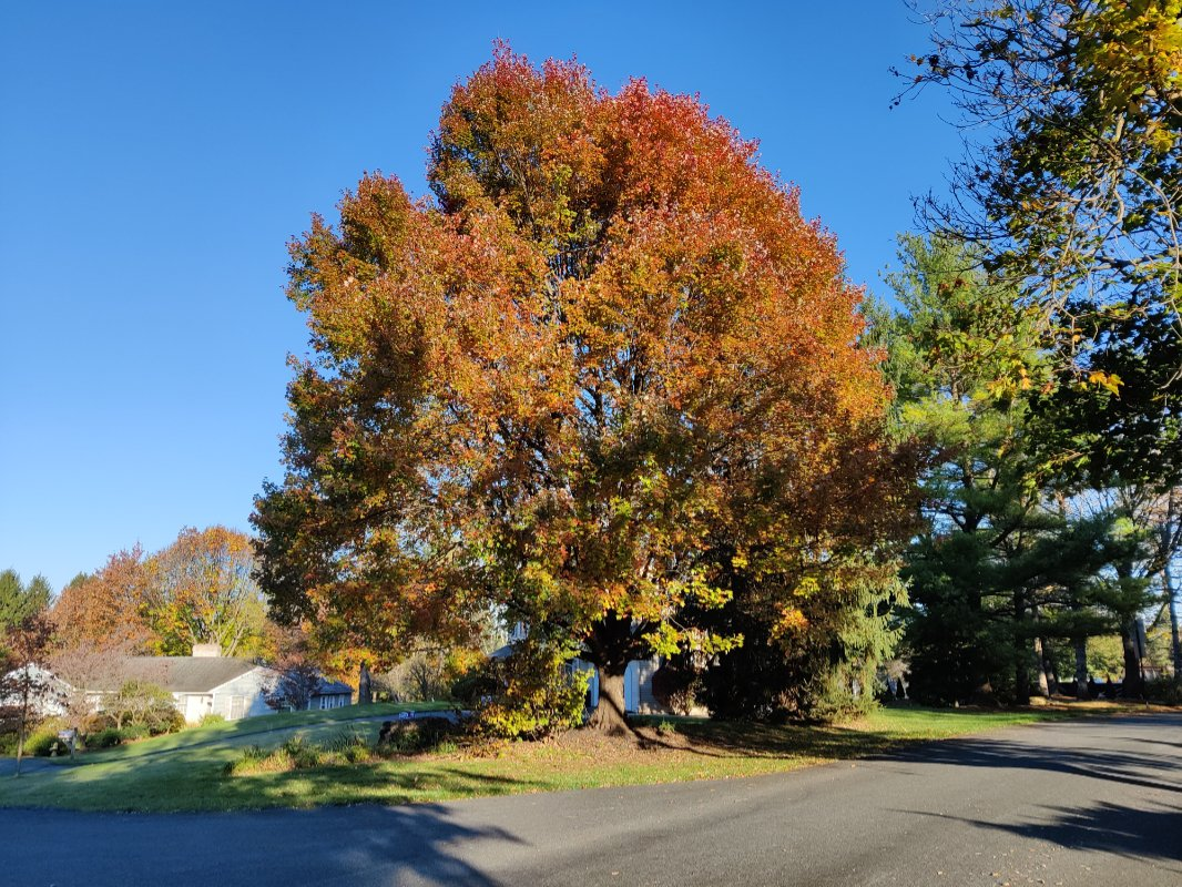 oneplus8t-tree.jpg